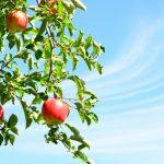 ○思考のなる木を育てる